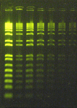 6X GRGreen DNA Loading Buffer