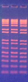 GRRed DNA Loading Buffer