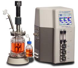使用HEK 293细胞的瞬时蛋白质生产